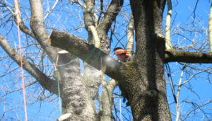 Motorsägenlehrgang AS Baum I (Zertifikat) @ Parkplatz Käppele
